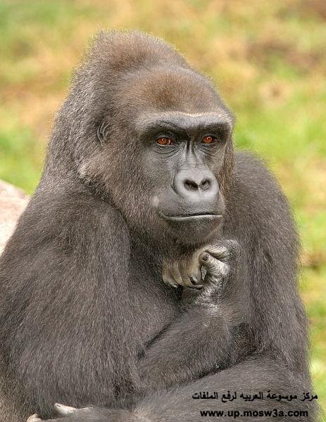 اروع الصور هتضحك قلبك حيوانات