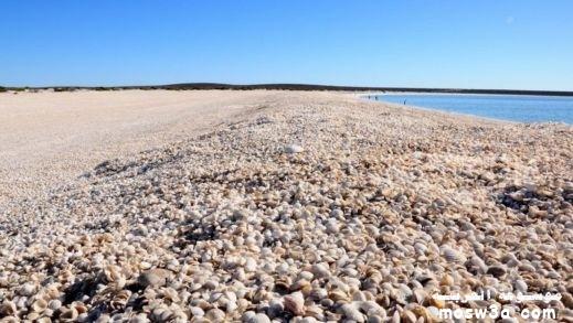 اجمل شواطىء العالم شاطئ الصدف